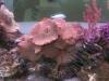 90 Reef
