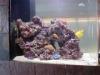 250 Reef