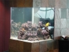 250 gallon reef