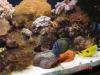 280 Reef in basement