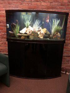 Aquariums for lease