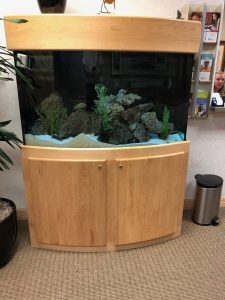 Aquarium in an office